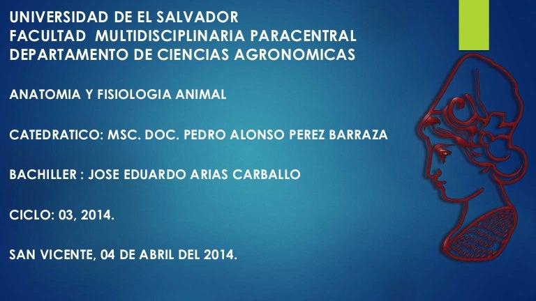 Anatomía Del Sistema Respiratorio Animal.