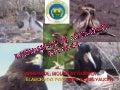 Expo de aves POR ISABEL YAUCEN