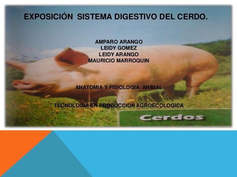 Exposicion sistema digestivo del cerdo (1).