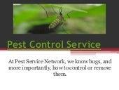 Termite Treatment