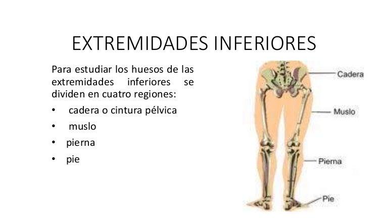 cuales son las extremidades inferiores del cuerpo humano