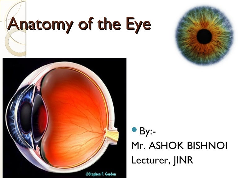 Ppt On Eye Anatomy