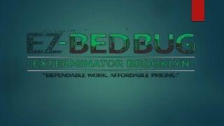 Ez bed bug exterminator brooklyn