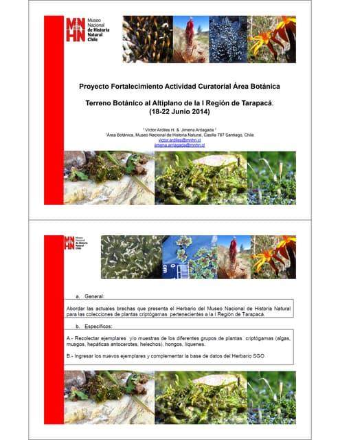 Terreno Botánico en Tarapacá