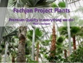 Fachjan Project Plants