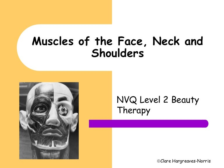 Muscles Of The Face And Neck Diagram 97217 | TIMEHD