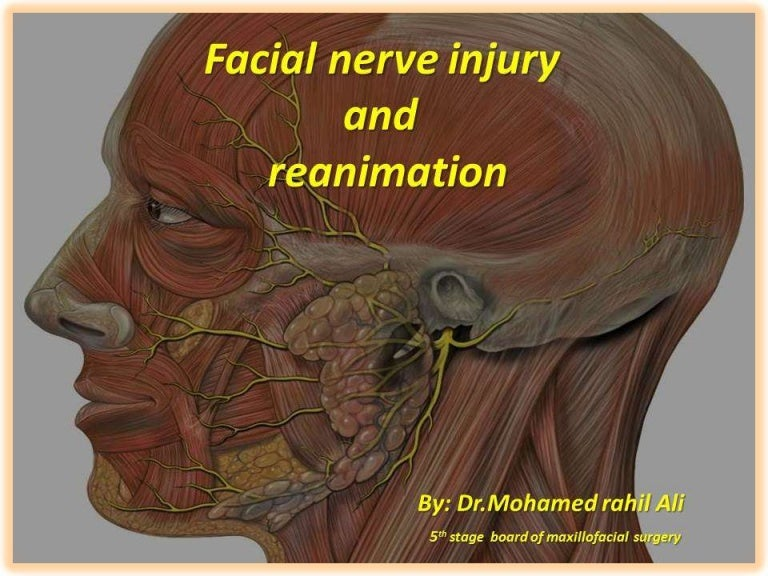 Facial Nerve Injury And Reanimation