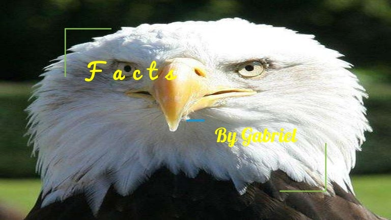 Eagle Facts: 20 Interesting Information You Should Know