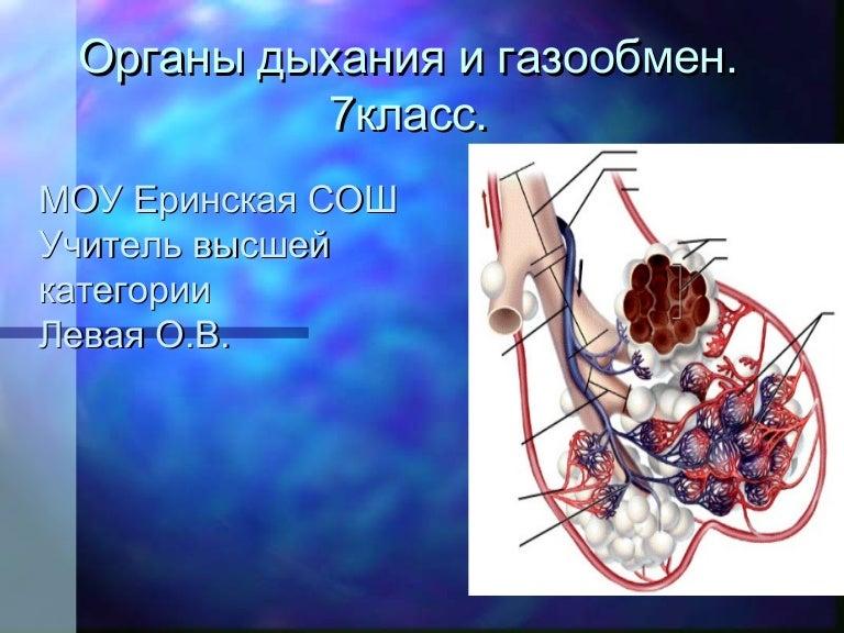 дыхательная система насекомых 4 класс презентация