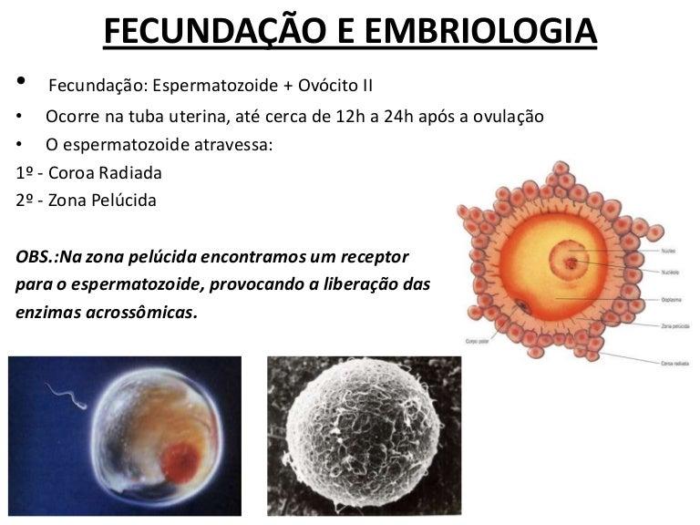 fecunda u00e7 u00e3o e embriologia