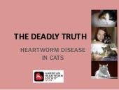 The Deadly Truth about Heartworm in Cats