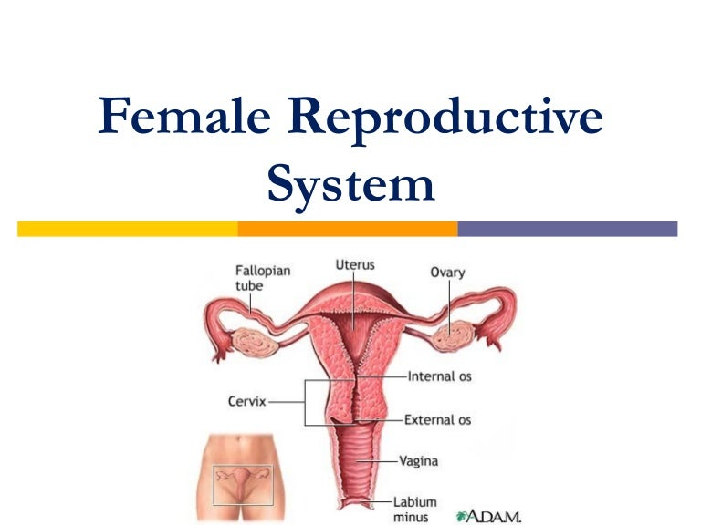 male and female reproductive structures