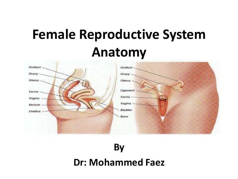 Female rprdctive