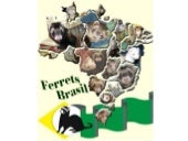 Ferrets Tropical Country