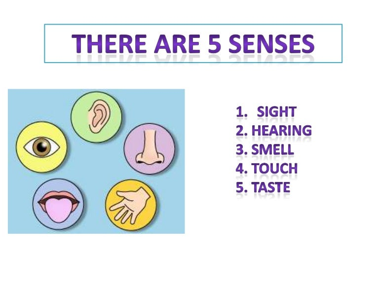 observing with 5 senses - 768×576