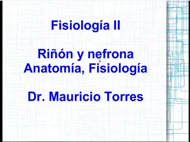 Fisiología 2 Riñón y Nefrona Anatomia, funciones