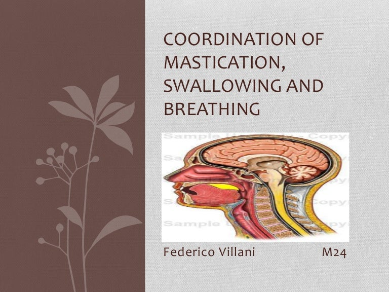 Coordination of mastication, swallowing and breathing