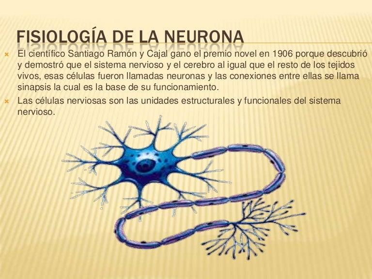 Fisiología de la neurona presentacion