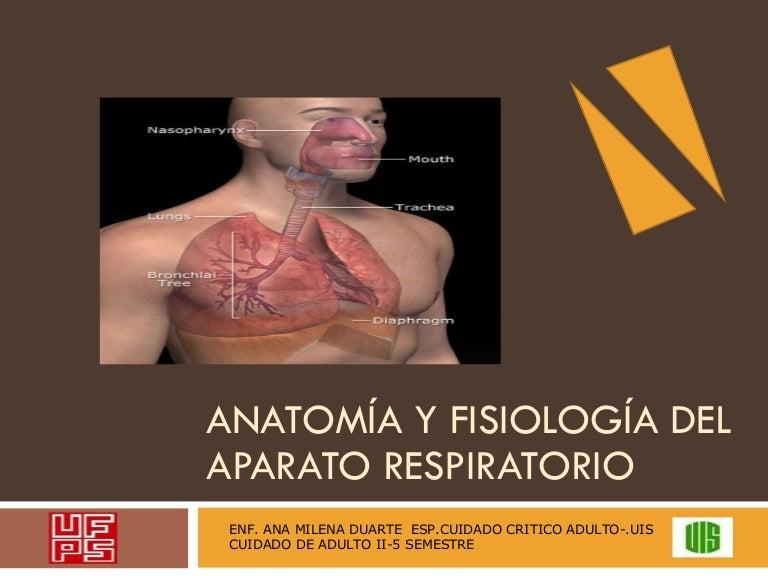 Anatomía y fisiología del aparato respiratorio
