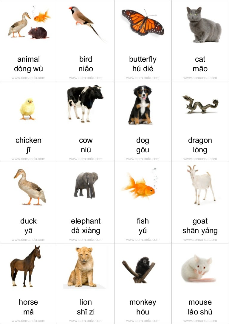 Animals Name With Letter D