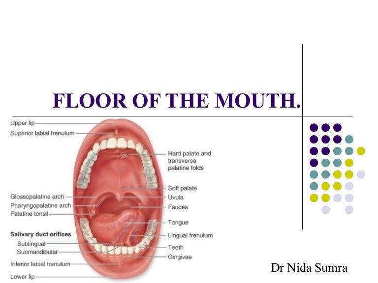 floor of the mouth rh slideshare net