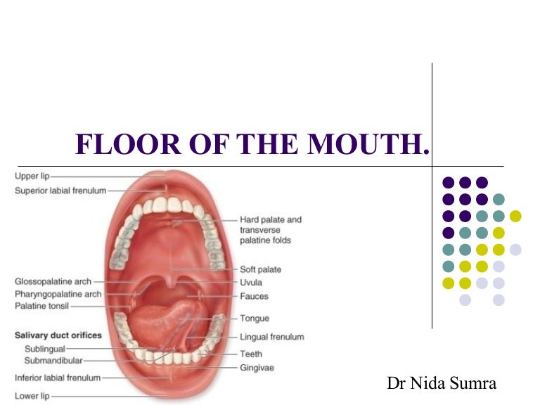 Floor Of The Mouth