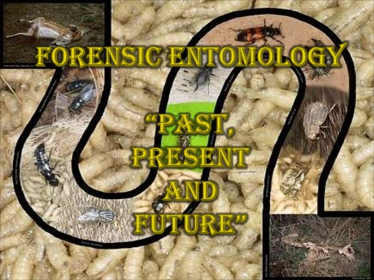 Forensic Entomology Past Present And The Future
