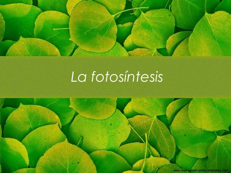 La fotosíntesis y sus fases