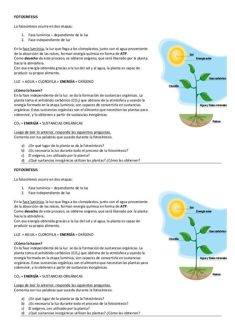 Fotosíntesis - primer año - actividad en clase