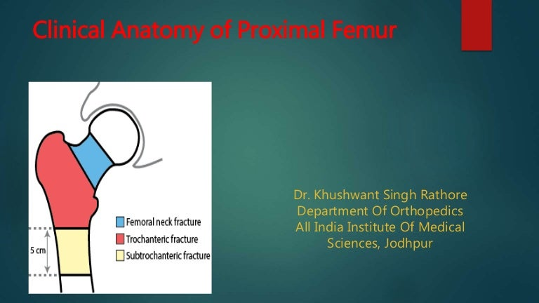 clinical anatomy of proximal femur