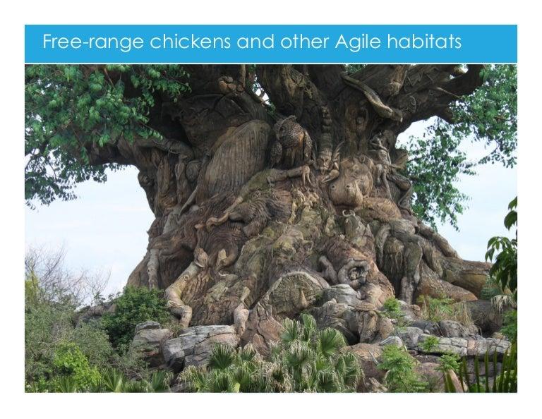 free range chickens and other agile habitats. Black Bedroom Furniture Sets. Home Design Ideas