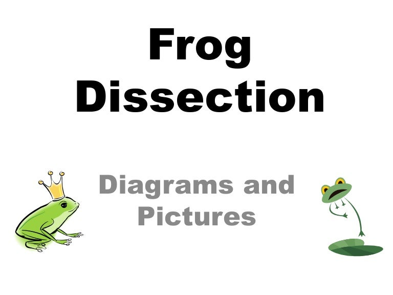 Frog dissection pictures and diagrams