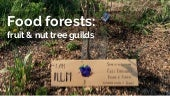 Food forests: fruit & nut tree guilds