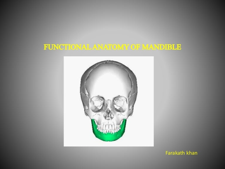 Functional Anatomy Of Mandible