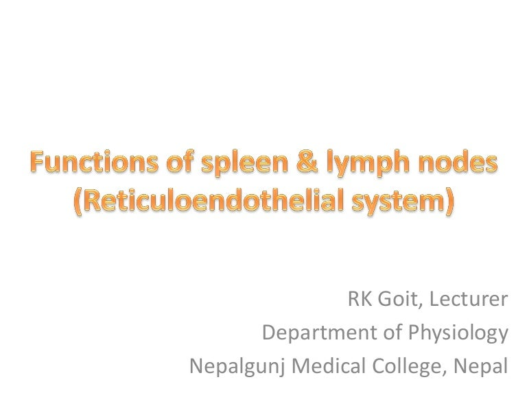 Functions Of Spleen And Lymph Nodes