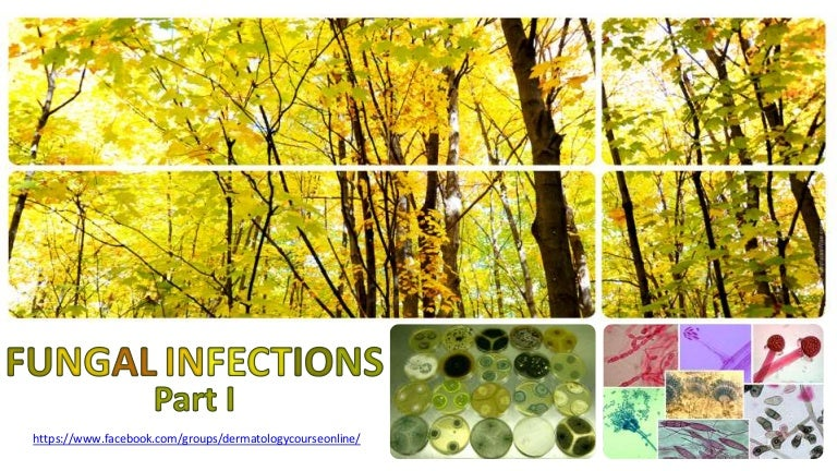 Fungal infections part I