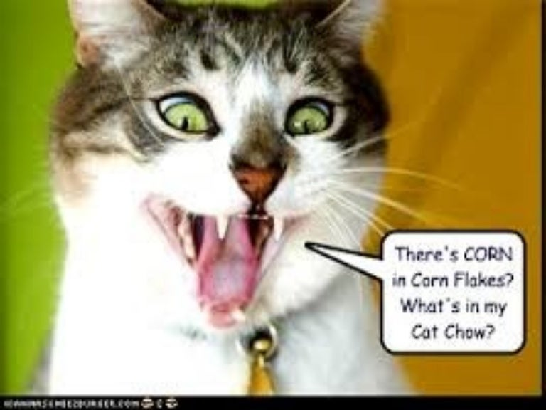 Image of: Gif Los Angeles Corporate Photographer Funny Cat Dog Videos