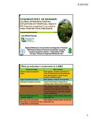 Global Epidemiological Situation of Fusarium Wilt of Bananas (TR4)