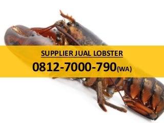 Jual Lobster Mutiara, 0812-7000-790 (WA)