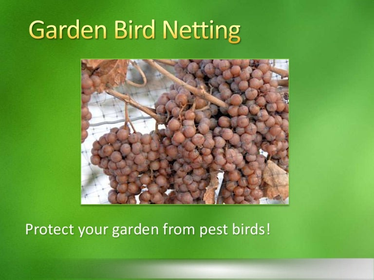 gardenbirdnetting 130712152352 phpapp01 thumbnail 4jpgcb1373642712