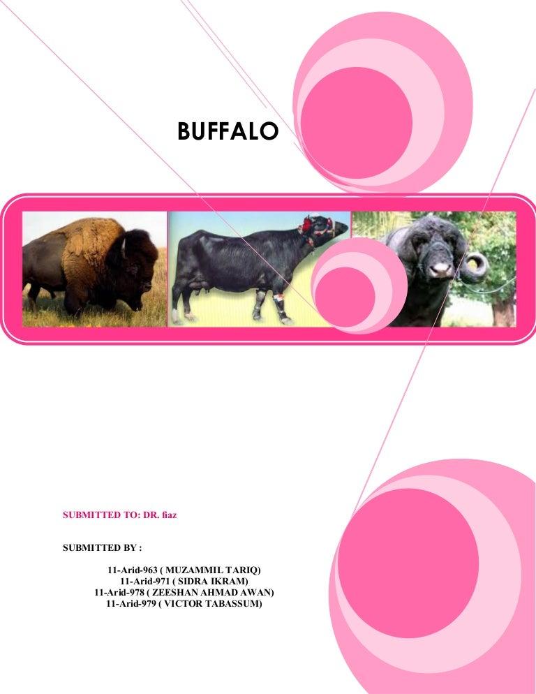 General buffalo