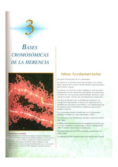Genetica 7a ed_-_cap_03