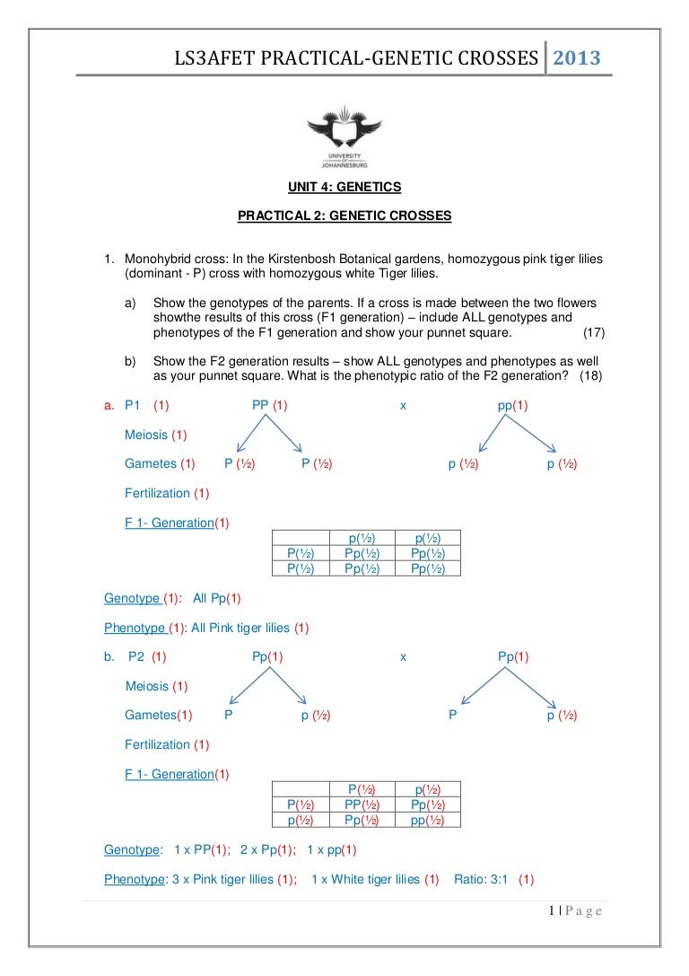 Bestseller: Chapter 10 Dihybrid Cross Worksheet Answer Key Pdf