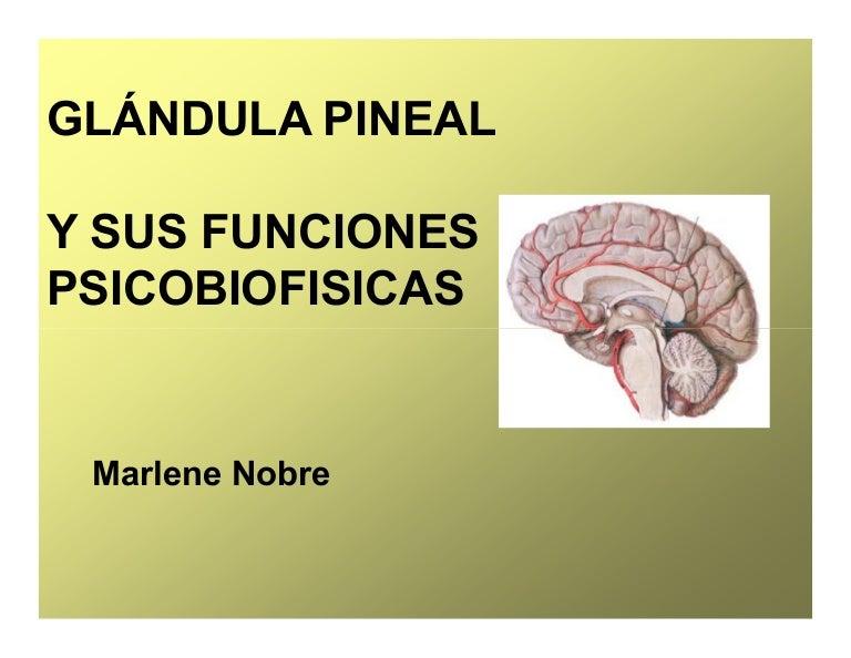 Glandula pineal y_sus_funciones