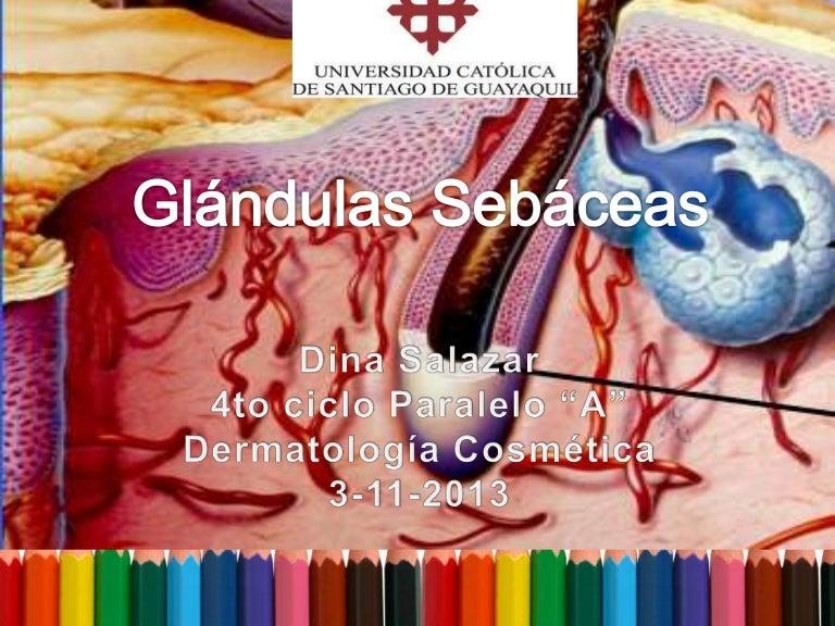 Glandula sebáceas