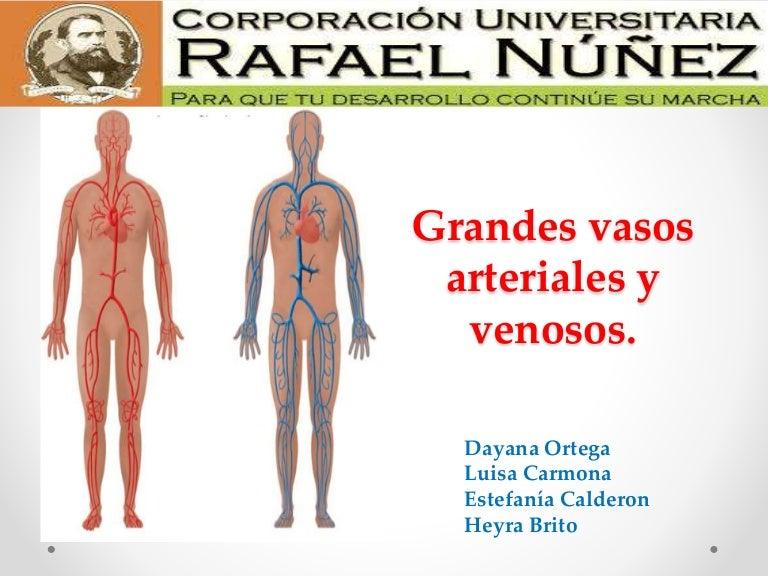 Y venoso arterial slideshare sistema