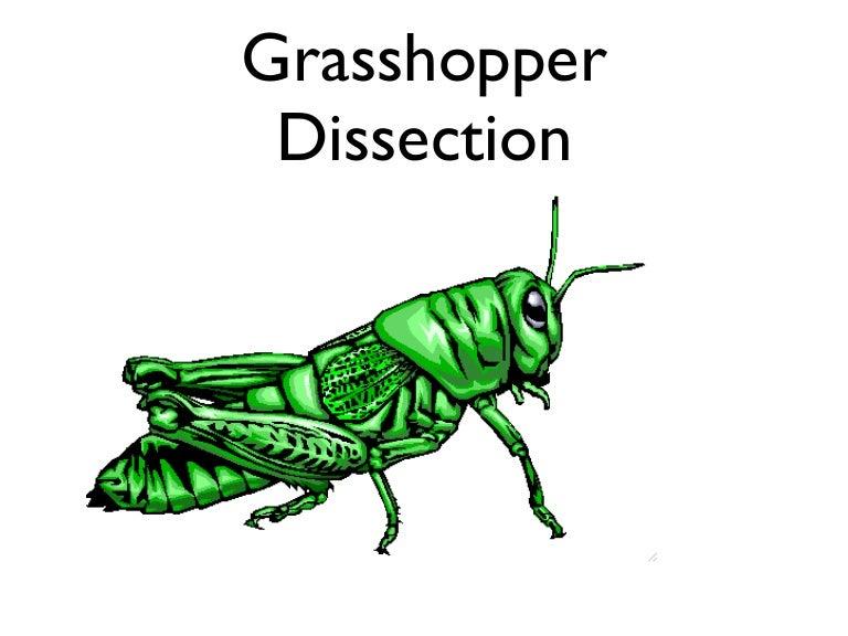 Grasshopper Alternative