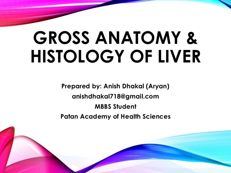 Gross Anatomy And Histology Of Liver
