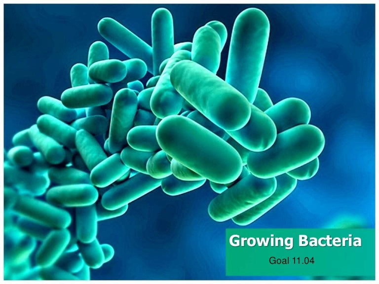 powerpoint templates free download bacteria gallery - powerpoint, Modern powerpoint