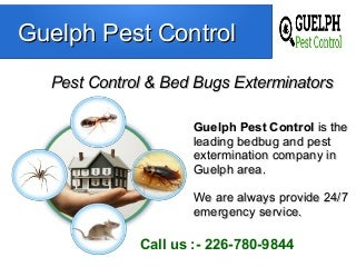 Guleph Pest Control - Bed Bugs Exterminators
